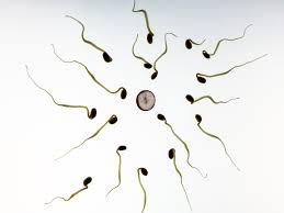 Мужские половые клетки